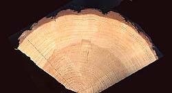 What Is Dendrochronology Cybis Dendrochronology